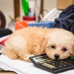 Vijf redenen om je hond wel of niet te verzekeren