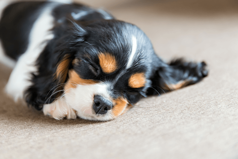 Tips om je hond een prettige jaarwisseling te geven
