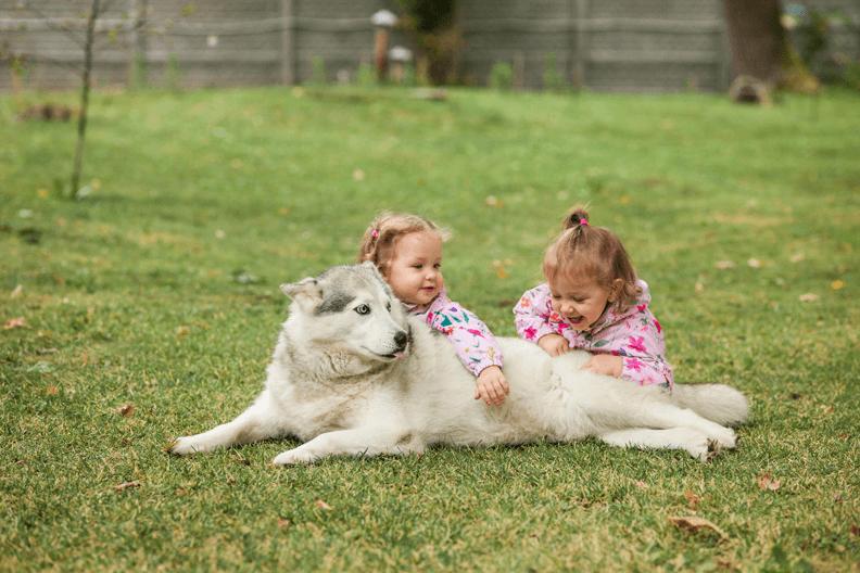 10 redenen waarom honden de beste huisdieren zijn
